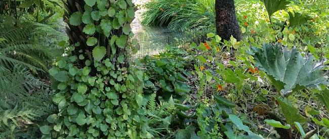 Manutenzione giardini l 39 albero for Manutenzione giardini