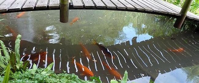pesci-al-giardino-heller